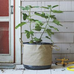 Good DIY idea for outside or large inside plants rather than a standard planter