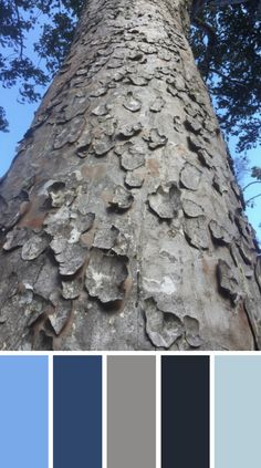 WALK THE TALK - Love the texture of this Kauri bark. Pic taken on conservation trip to Hauturu Island. Such an incredible experience! Check out the blog to find out how to track your story x