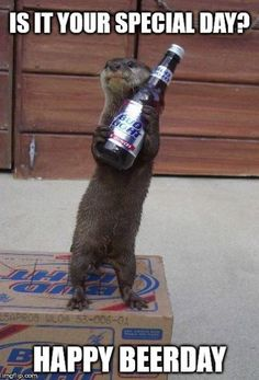 Funny animal pictures for this week 15 June funny animal pictures, funny animals, cute animals Animals And Pets, Baby Animals, Funny Animals, Otters Funny, Tierischer Humor, Otter Love, Happy Birthday Meme, Birthday Memes, Birthday Humorous