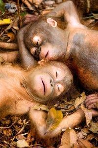 21 Photos Of Cute And Peaceful Sleeping Animals - Pets Impact Cute Baby Animals, Animals And Pets, Funny Animals, Wild Animals, Animals Planet, Small Animals, Animals Images, Safari Animals, Primates