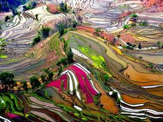 Rice Fields in Yunnan, China   Just amazing!!