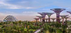 Gardens by the Bay | Grant Associates Planet Earth 2, Umbrella Tree, Singapore City, Gardens By The Bay, Urban Life, Endangered Species, Futuristic, Facade, Restoration