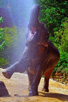 A very happy elephant | I love the pure joy in this image!