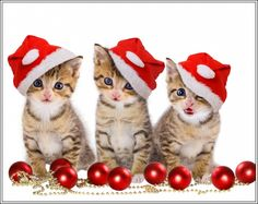 Pack Of 4 Kitten Cat Christmas Cats Greetings Stationery Notecards /Envelopes 10