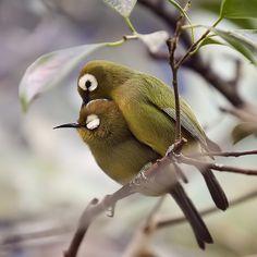 birds cuddling.