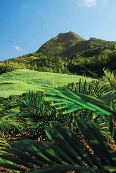 """The west of #Mauritius is a #paradise for """"nature"""" walks. The Black River Gorges and the surrounding mountains offer magnificent views. The national #park includes a luxuriant forest of 6574 acres with 50 kilometers of trails, some of which are signposted with indications of the distance they cover."""