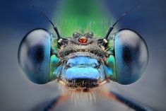 Awesome macro shot, you should check out the rest of his work.