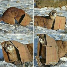 All cats love boxes.