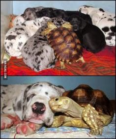 Love is not bound to species