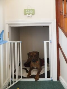 under the stair pet house - Would need a gate that is big enough for Bella to get through but not so big that Rora can get through.