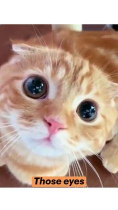 Funny Cute Cats, Cute Funny Animals, Cute Baby Animals, Animals And Pets, Cute Little Kittens, Cute Cats And Kittens, Animal Jokes, Funny Animal Memes, Cute Animal Videos