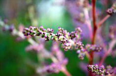 Kukkapenkistä napsittu kuva