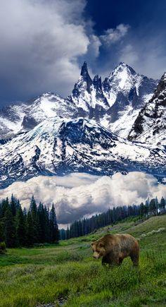 Snow capped peaks behind bear