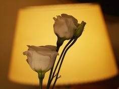 White roses and lamp