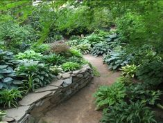 Shade Garden Path with stone wall