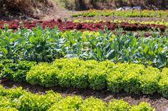 Starting A Vegetable Garden, Backyard Vegetable Gardens, Organic Gardening, Gardening Tips, Fast Growing Vegetables, Types Of Fruit, Edible Plants, Self Watering, Container Gardening