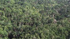 Resultado de imagen de selva cubana
