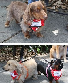 Dogs help in marriage proposal