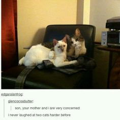Cats