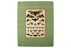 Antique Lithograph of Moths, 1885