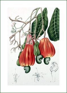 cashew tree (fabric panel). Digitally printed cotton fabric panel for your creative work (sewing, patchwork, framing, collage...).