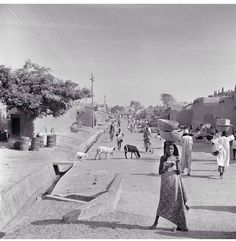 A friday in Kano, 1950