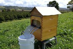 Commercial size FlowHive. Honey on Tap. Easier for the bees and the beekeepers.  #foodsecurity #honeyontap