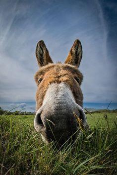 Fisheye Donkey Photo by Magda Nowacka -- National Geographic Your Shot