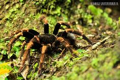 Costa Rica Nature Photography - spider