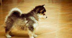 24-croisements-qui-donnent-naissance-a-des-chiens-hors-du-commun-une