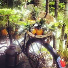 A vintage bicycle is part of the decor at Veranda Grand Baie, Mauritius.