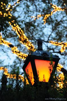 Street lamp in Central Park, NYC