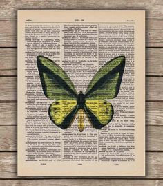 Butterfly Green and Yellow  - Vintage Dictionary Book Page Art Print. $8.00, via Etsy.