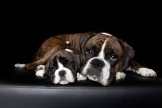 Dozer & Charli Your dog is a member of your human family and may even have a family of his or her own. Boxer And Baby, Boxer Love, Best Dog Breeds, Best Dogs, Dog Breed Selector, Cheap Dog Kennels, Girl Dog Names, Boxer Dog Puppy, Personalized Dog Tags
