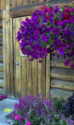 Hanging Baskets for Front Porches  More at:  http://www.valenciamindfulnessretreat.org
