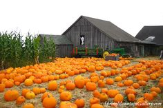 Halloween & Pumpkin Season - Half Moon Bay - San Mateo County Coastside
