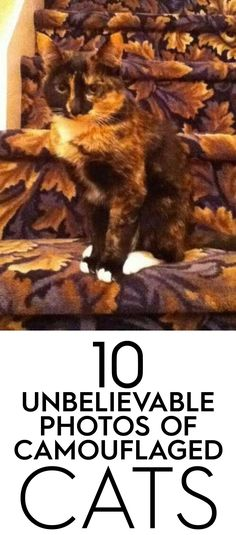 10 Unbelievable Photos of Camouflaged Cats!! Also, how have I never stumbled upon ilovecatssite.com before?