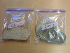 Mrs. Byrd's Learning Tree: Yucky Germs! (A science experiment for kids)