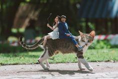 Khontuelek Photography - Google 搜尋 Goats, Google, Animals, Animais, Animales, Animaux, Animal, Goat, Dieren