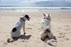 Mais de metade dos donos de cães e um quarto dos donos de gatos levam os bichos de férias. O P3 seleccionou alguns hotéis e turismos rurais onde os animais são bem-vindos