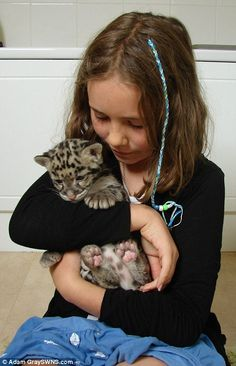 Nimbus the clouded leopard was reared at home by Jamie Craig with a helping hand from his ...