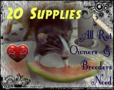 20 Supplies every rat owner and breeder needs to have on hand!