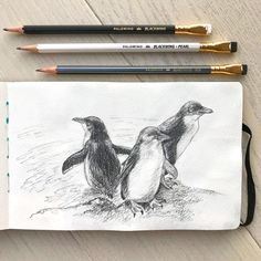 Penguin Sketch, Penguin Drawing, Penguin Tattoo, Penguin Art, Atypical, Animal Drawings, Pencil Drawings, Fairy Drawings, Cute Fairy