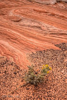 Cactus on the Edge - Vermillon Cliffs - Paul Gill