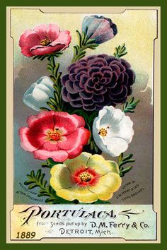 Olde America Antiques | Quilt Blocks | National Parks | Bozeman Montana : Flowers - Portulaca DM Ferry Co