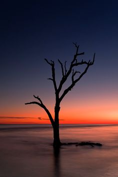 Blazing Branches - Benjamin Edelstein Landscape Photography