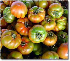 sicilská rajčata Merinda