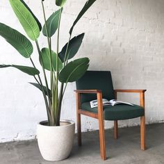 *THIS IS AN ARTIFICIAL PRODUCT*The Plants Project's HUGE Bird of Paradise Plant has magnificent large paddle-shaped leaves. Even indoors, a Bird of Paradise Plant brings the tropical vibes. The Plants Project promises the highest quality artif. Artificial Birds, Artificial Plant Wall, Dulux Valentine, Plant Delivery, Birds Of Paradise Flower, Plant Projects, Decoration Plante, Balcony Plants, Faux Plants