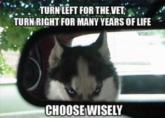 Choose Wisely, Human