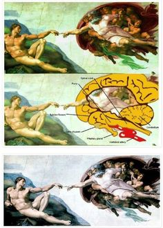 In physician Frank Meshberger published a paper in the Journal of the American Medical Association deciphering Michelangelo's imagery with the stunning recognition that the depiction in 'God. Aliens And Ufos, Ancient Aliens, Ancient History, Miguel Angel, Michelangelo, The Creation Of Adam, Legitimate Online Jobs, American Medical Association, Spirit Science